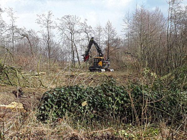 De Bomenrooimachine Doet Zijn Werk