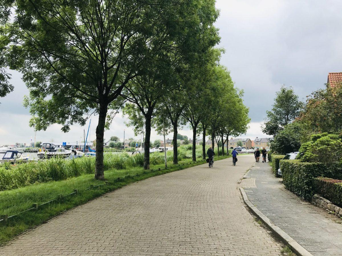 Bomen Rooien Aan De Meersweg In Grou
